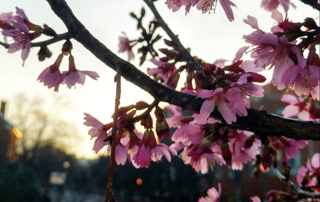 Your One-Month Training Guide to the Cherry Blossom Ten-Miler